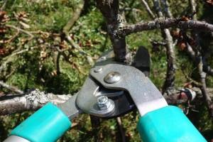 pruning-shears-535350_640